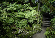 lost-gardens-of-heligan