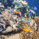 Newquay Aquarium 150x150