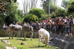 newquay-zoo-animals