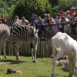 newquay zoo cornwall 150x150